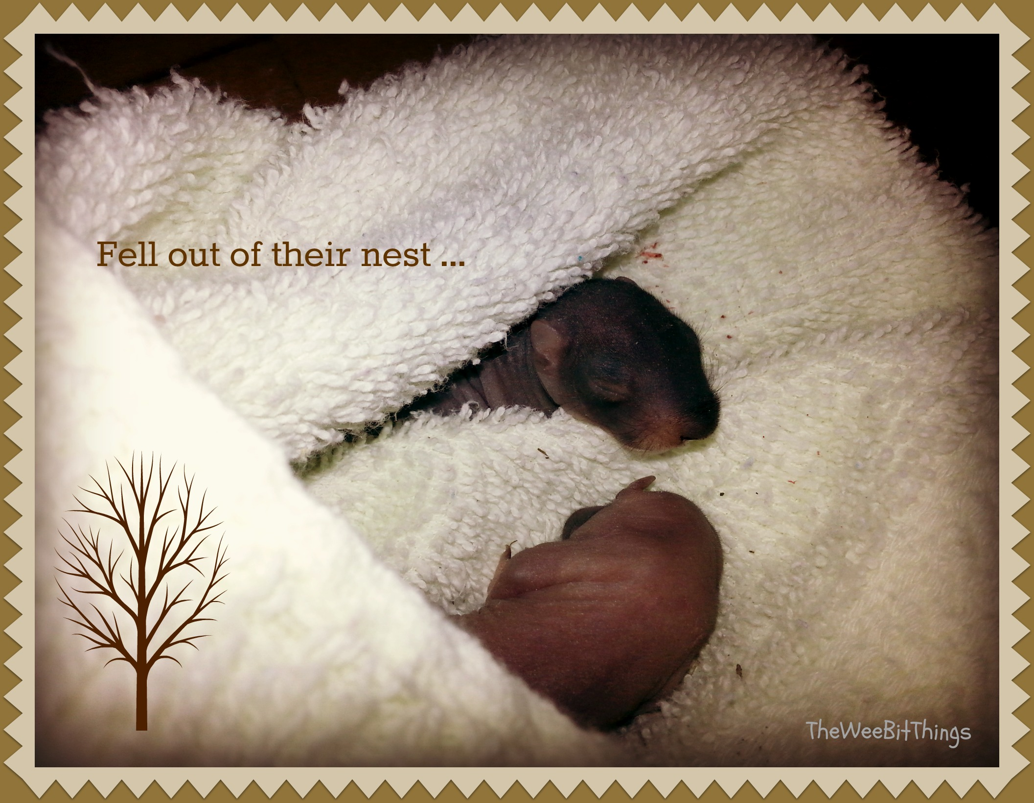 black baby squirrels wrapped in a blanket