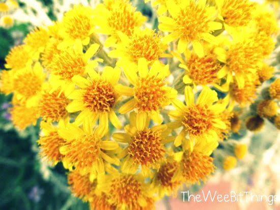 Bundle of Yellow Daisies Image