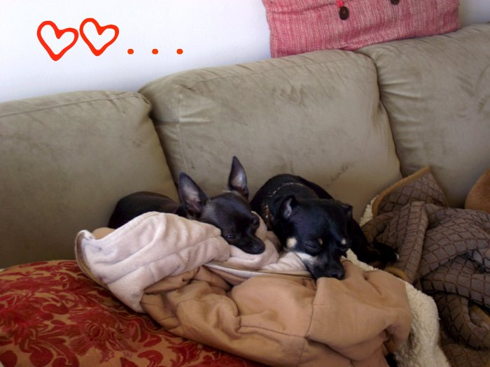 Two cute dogs cuddled up together